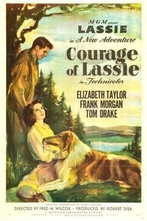 A Coragem de Lassie (1946) Dublado Online