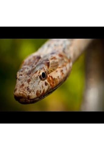 Rarity to Recovery: The Story of the Antiguan Racer Snake