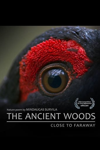 Poster for The Ancient Woods
