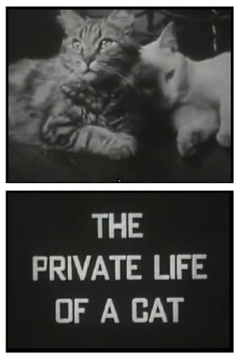 Poster of The Private Life of a Cat