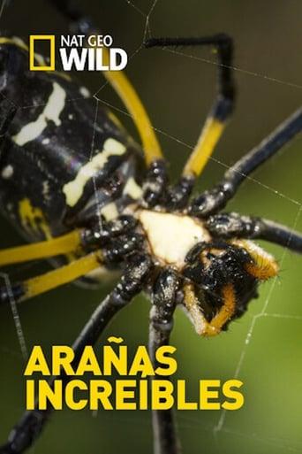 Poster of Arañas increíbles
