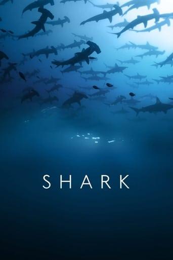 Die Welt der Haie