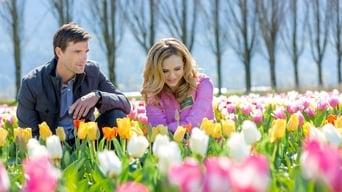 Tulips in Spring (2016)