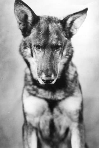 Image of Rin-Tin-Tin