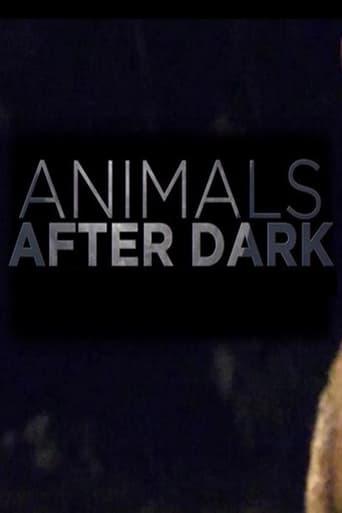 Animals After Dark