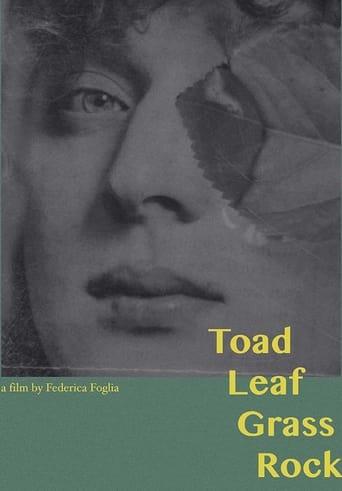 Toad, Leaf, Grass, Rock
