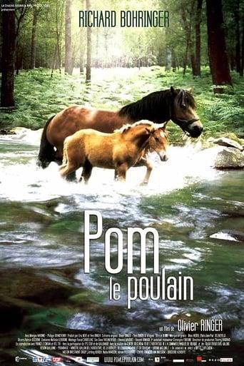 Pom, le poulain