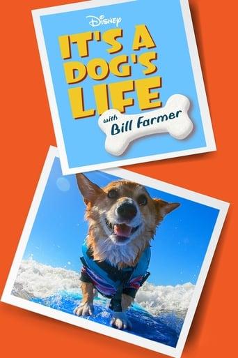 Ein Hundeleben mit Bill Farmer