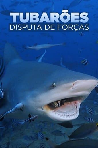 Bullenhaie auf Angriff