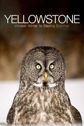 Poster of Yellowstone: Wildest Winter to Blazing Summer