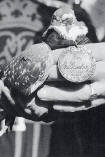 War Pigeon
