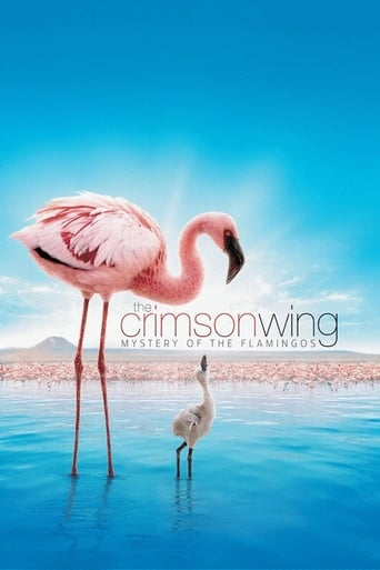 Poster of The Crimson Wing: Mystery of the Flamingos