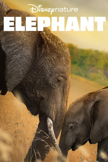 Elephant Film Streaming
