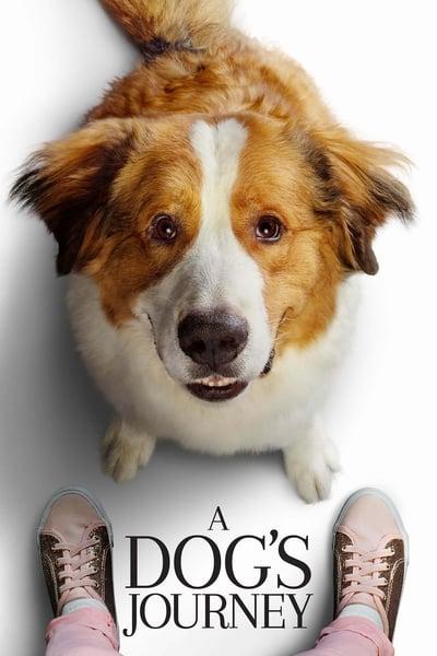 Bir Köpeğin Serüveni