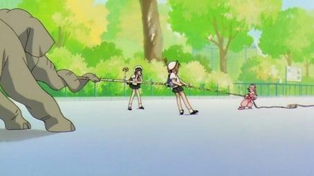 Sakura and the Elephant's Strength Contest