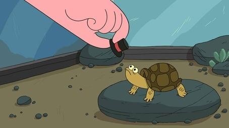 Turtle Hats