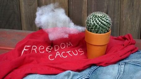 Freedom Cactus