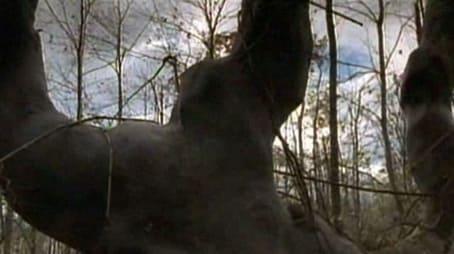 Die Geschichte vom Baum der Ewigkeit
