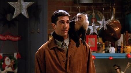Affen unter sich