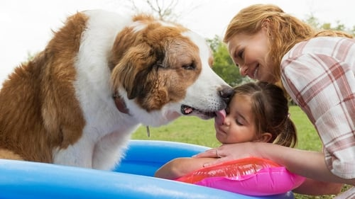 Watch A Dog's Journey (2019) Full Movie Streaming Online Free