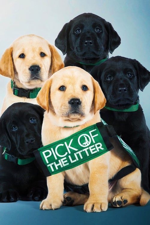 Pick of the Litter (2019) Film complet HD Anglais Sous-titre