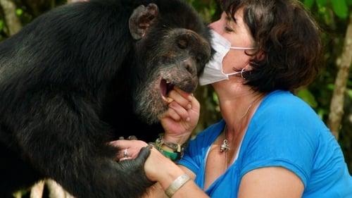 Estelle's Favorite Chimp