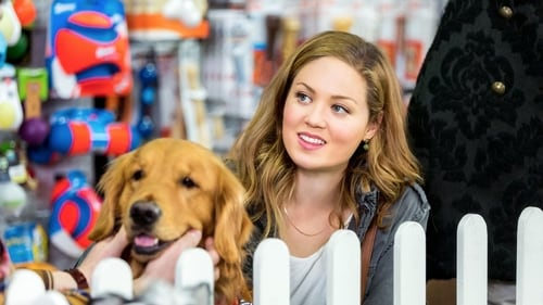 My Boyfriends' Dogs (2014) Watch Full Movie Streaming Online