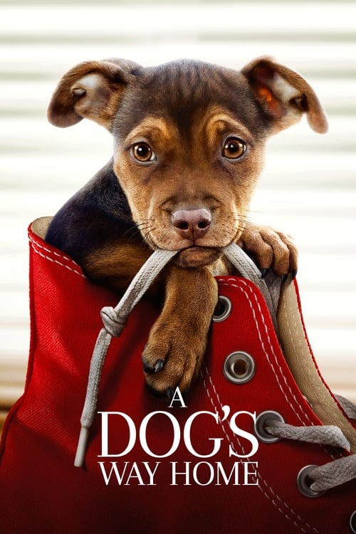 watch A Dog's Way Home full movie online stream free HD