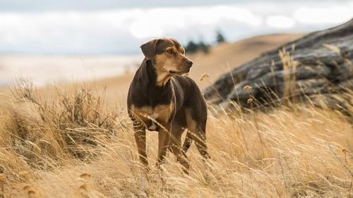 A Dog's Way Home (2019) Assistir Cinema Online