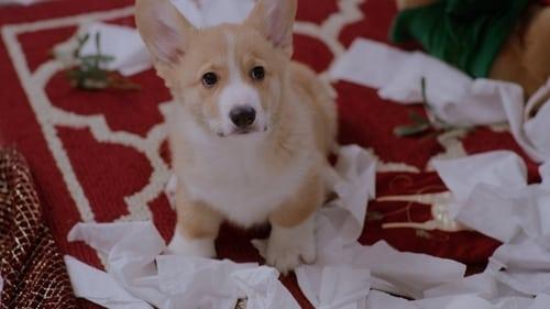 A Very Corgi Christmas (2019) Watch Full Movie Streaming Online