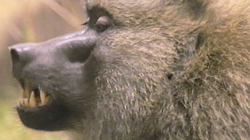 Nature: Season 18 – Episode Inside the Animal Mind Part Two: Do Animals Have Emotions?