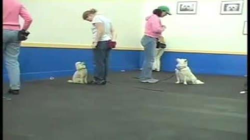 SIRIUS Adult Dog Training en Stream vf Gratuit