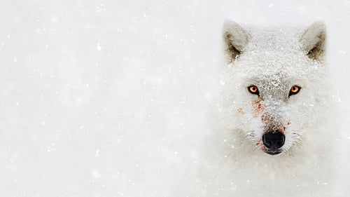 Assistir Planeta Hostil – Todas as Temporadas – Dublado Online