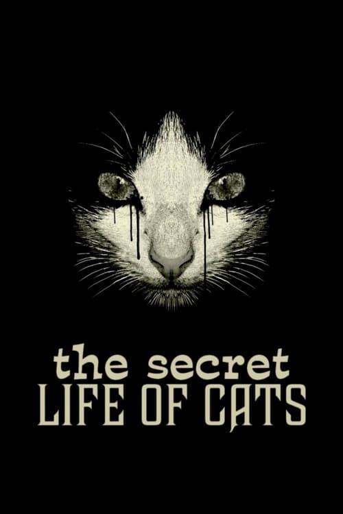 Assistir Filme School for Secrets Em Boa Qualidade Gratuitamente
