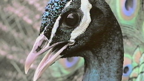 Nature: Season 18 – Episode Inside the Animal Mind Part One: Are Animals Intelligent?