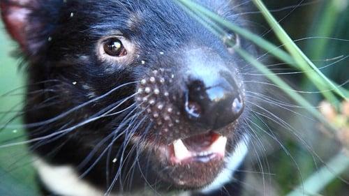 David Attenborough's Tasmania (2018)