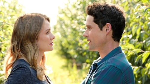 Watch Love Under the Olive Tree Online Tvmuse