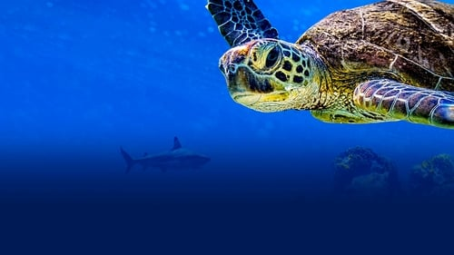 Turtle Odyssey 2018