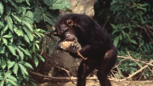 Lucy the Human Chimp English Full Movier