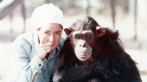 Lucy the Human Chimp Whose
