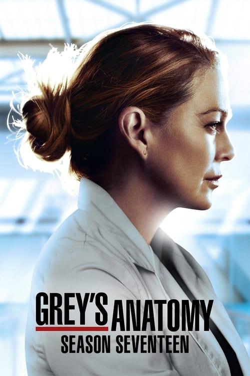 Subtitles Grey's Anatomy Season 17 in English Free Download