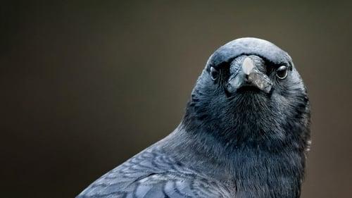 NOVA: Season 44 – Episode Bird Brain