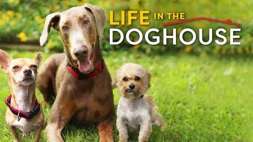 A Casa é dos Cachorros