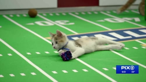 Kitten Bowl VIII Special Read more
