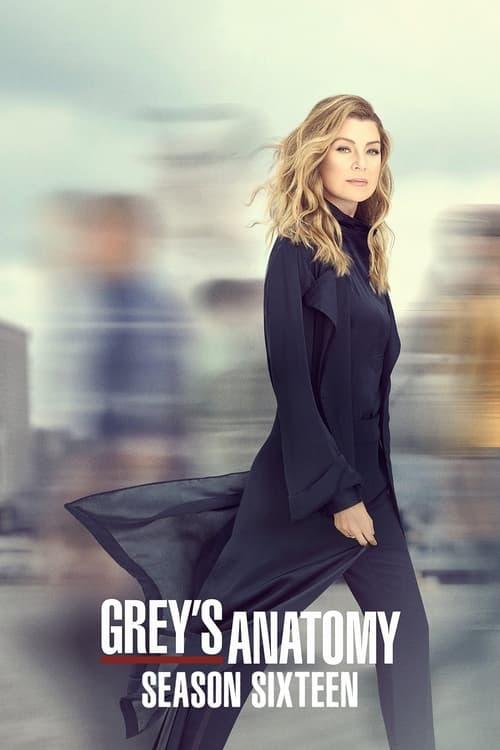 Subtitles Grey's Anatomy Season 16 in English Free Download