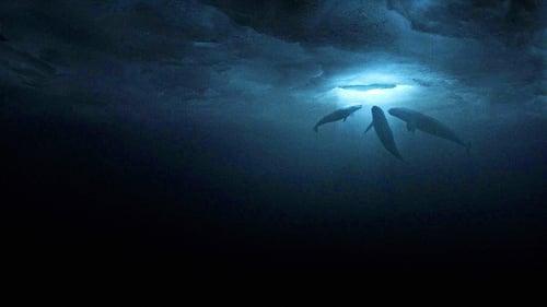 ปาฏิหารย์วาฬสีเทา