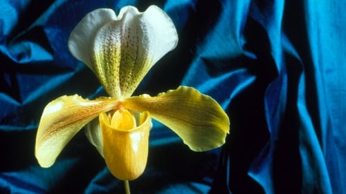 Nature: Season 18 – Episode Obsession with Orchids