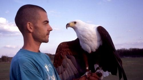 Nature: Season 19 – Episod Extraordinary Birds