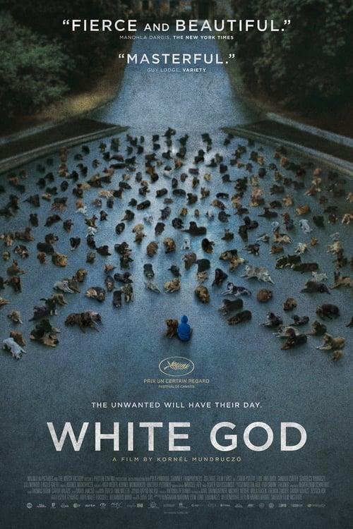 White God ( Beyaz Tanrı )