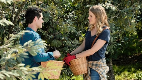 Watch Love Under the Olive Tree Online Hollywoodtake